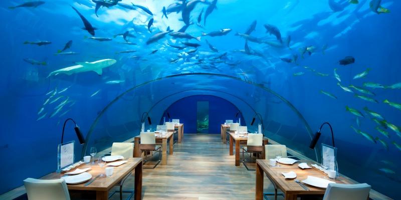 Conrad Maldives_Ithaa Undersea Restaurant