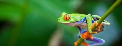 Nicaragua Flora and Fauna