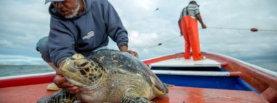 Red Sustainable Travel Turtle Conservation