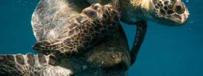 Turtle Conservation Red Sustainable Travel