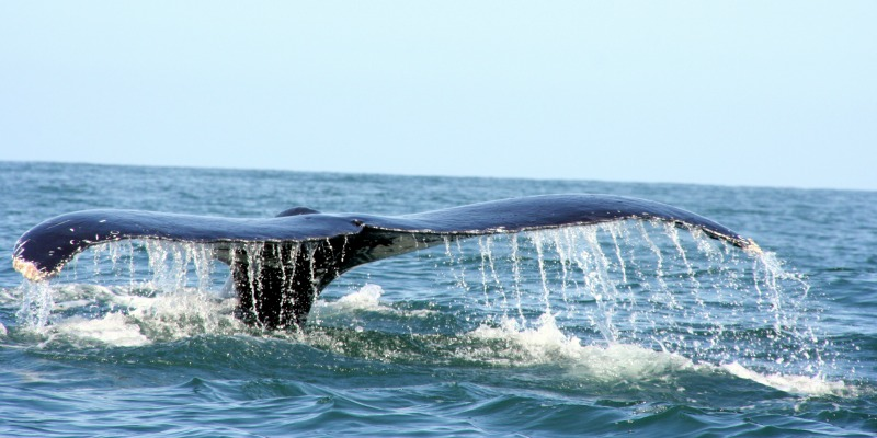 Whale Conservation