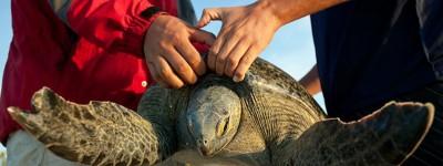 sea-turtles-red-travel-mexico Photograph by Elizabeth Moreno