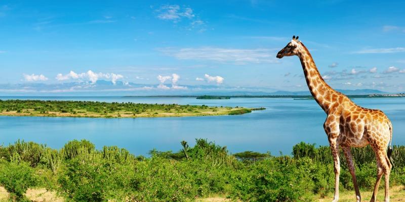 Things to do in Uganda
